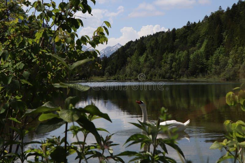 Bello lago nelle montagne in Baviera Germania fotografia stock