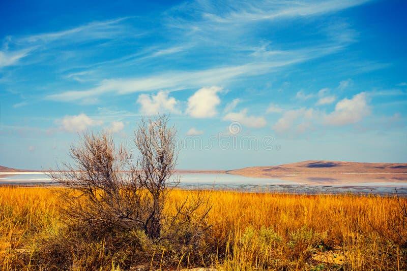Bello lago in un deserto fotografia stock