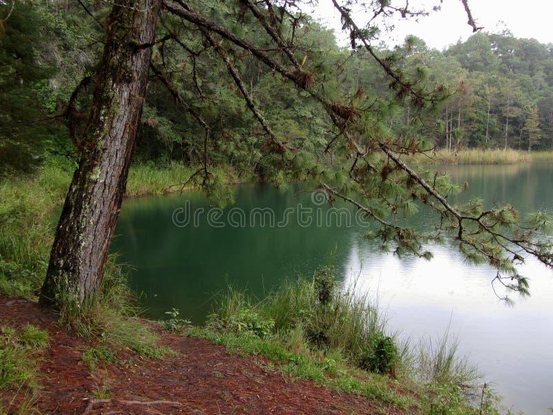 Bello lago verde in Chiapas fotografia stock