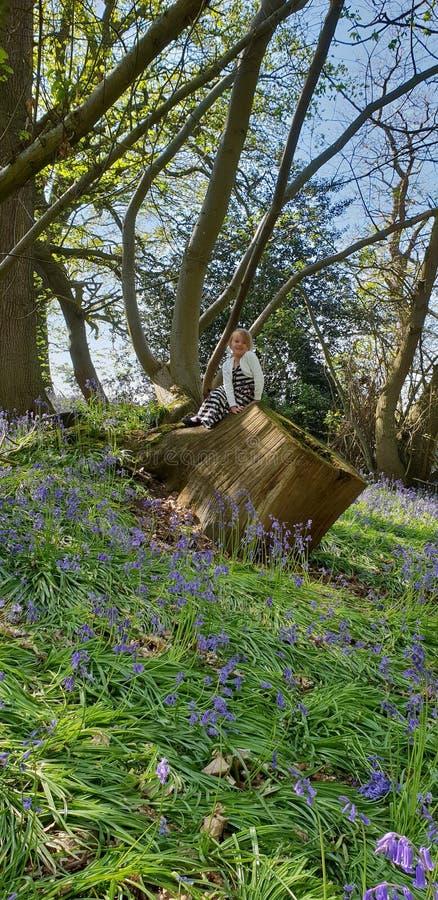 Bello legno blu di Bell fotografia stock