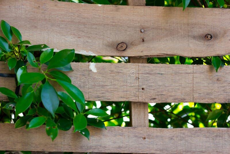 Bello legno con le inserzioni della foglia in legno Sfondo naturale fotografia stock libera da diritti