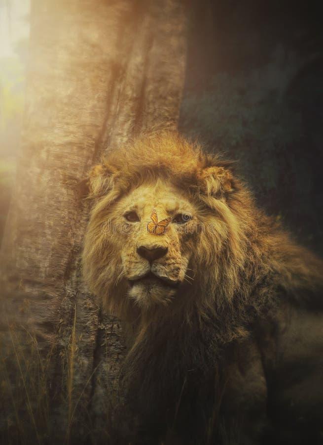 Bello leone di speranza in selvaggio fotografia stock
