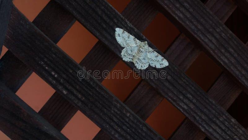 Bello lepidottero bianco fotografia stock