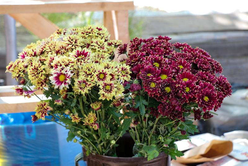 Bello mazzo dei fiori fotografia stock libera da diritti