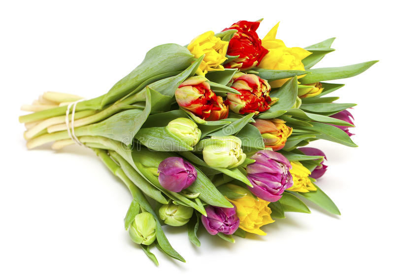 Bello mazzo dei tulipani freschi e variopinti immagini stock