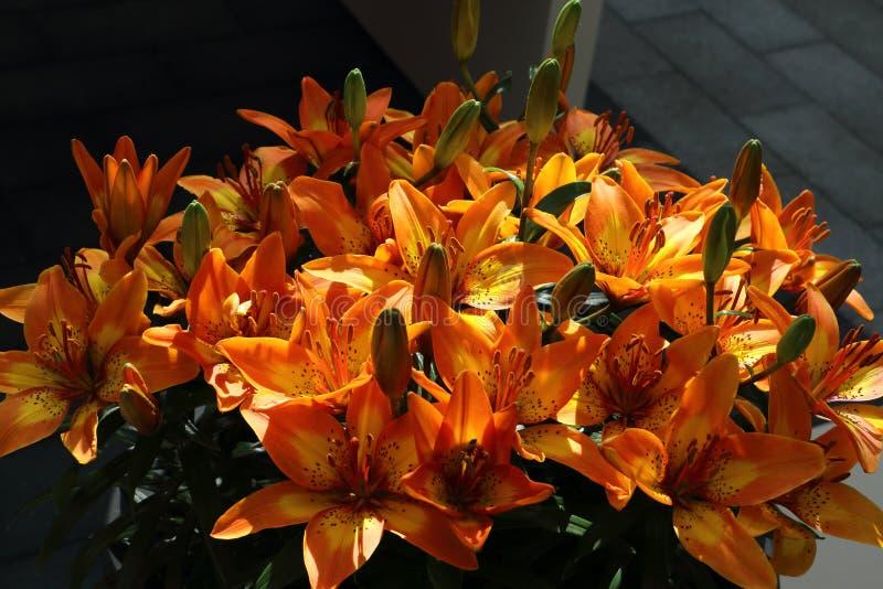 Bello mazzo del fiore del giglio in giallo arancione fotografie stock libere da diritti
