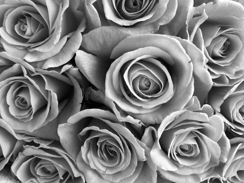 Bello mazzo delle rose fotografia stock libera da diritti