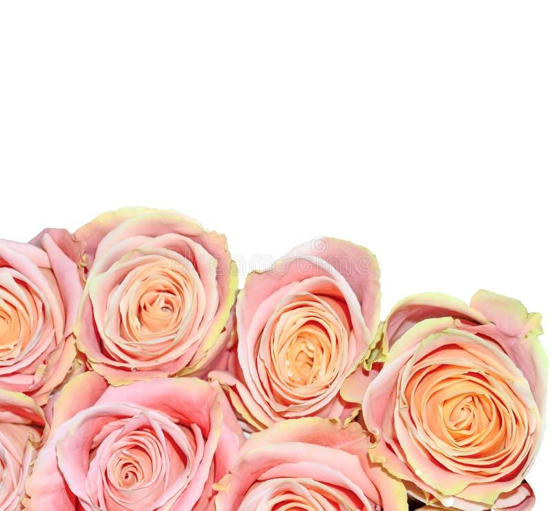 Bello mazzo delle rose rosa isolate su Flor festiva bianco- fotografia stock