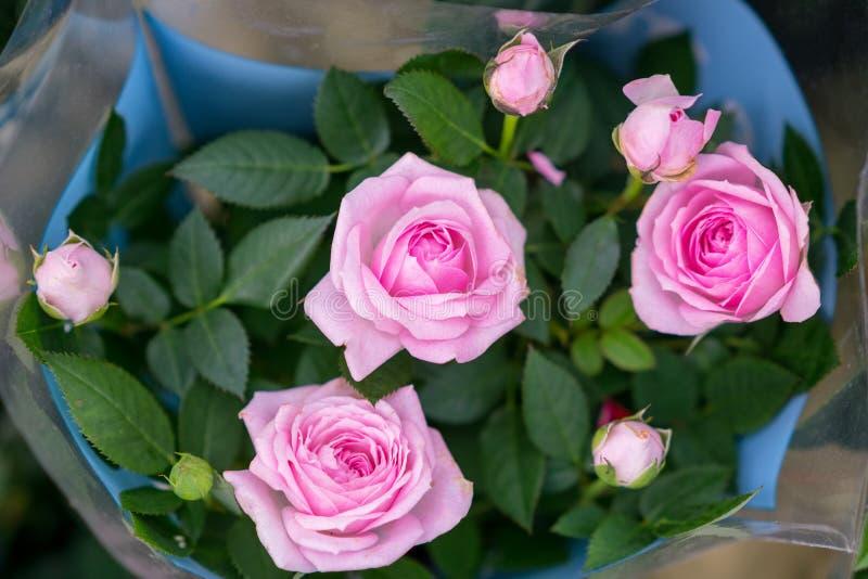 Bello mazzo delle rose rosa, piccoli germogli immagini stock libere da diritti