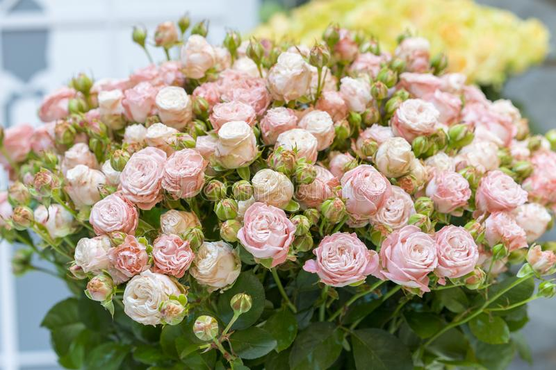 Bello mazzo di nozze in mani della sposa Bello mazzo delle rose immagini stock libere da diritti