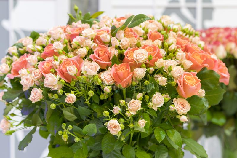 Bello mazzo di nozze in mani della sposa Bello mazzo delle rose immagini stock