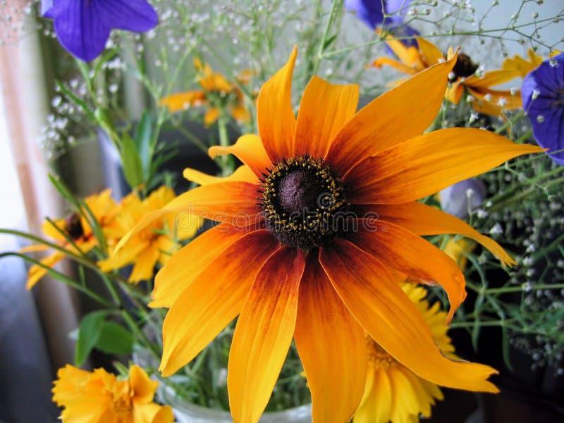 Bello mazzo luminoso con il fiore di rudbeckia fotografia stock