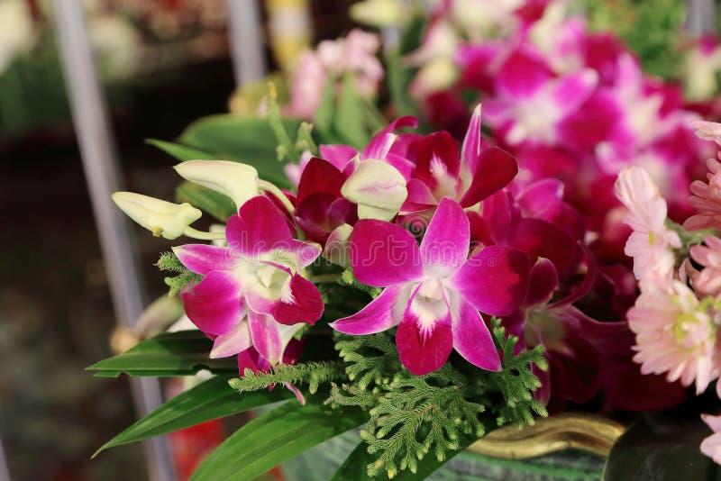 Bello mazzo porpora dell'orchidea per l'offerta del Buddha fotografia stock