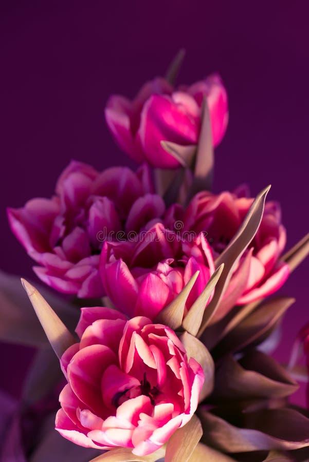 Bello mazzo rosa fresco dei tulipani su fondo porpora Telefono mobile giallo Copi lo spazio immagini stock libere da diritti