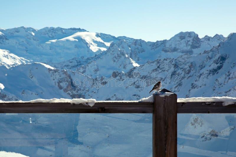 Bello Mountain View di inverno dal ristorante all'aperto alpino in alpi, Francia fotografie stock libere da diritti