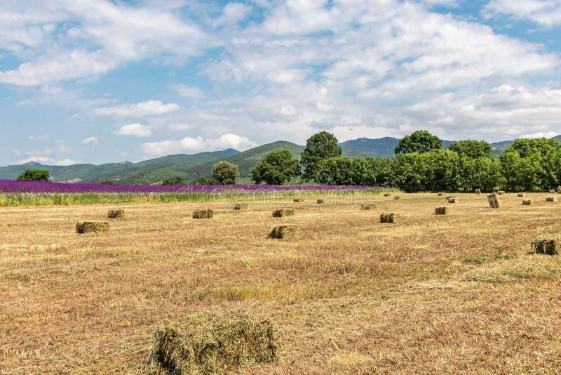 Bello paesaggio, campo giallo con i mucchi di fieno, fiori lilla, alberi e montagne verdi e cielo blu con le grandi nuvole bianch immagini stock libere da diritti