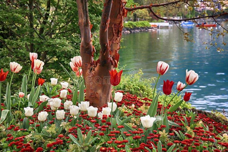 Bello paesaggio con i fiori ed il lago Lemano, Montreux, Swit fotografie stock libere da diritti