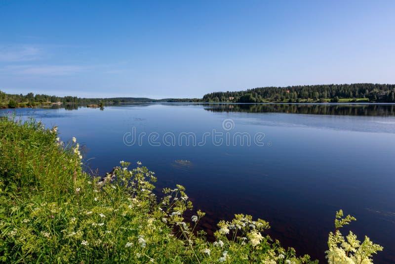 Bello paesaggio con il fiume e fiori bianchi su priorit? alta immagine stock