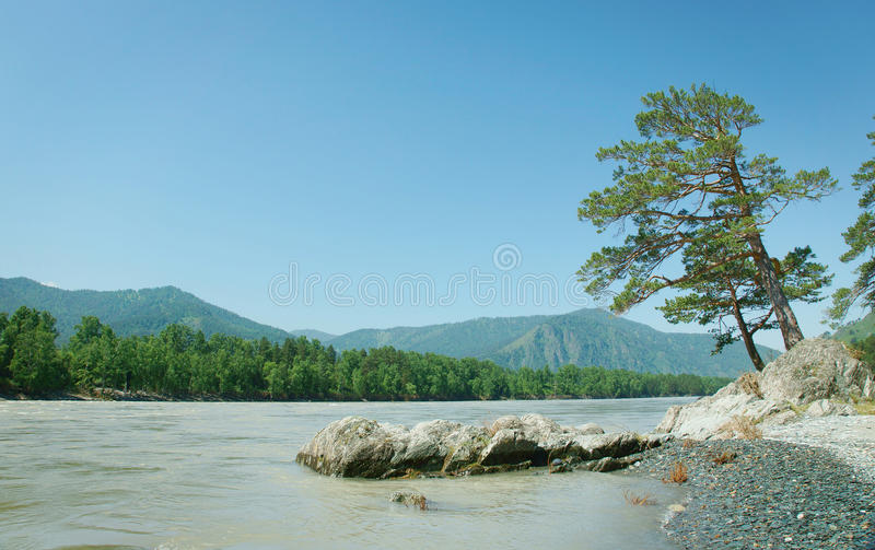 Bello paesaggio con il pino sulla sponda del fiume fotografie stock libere da diritti