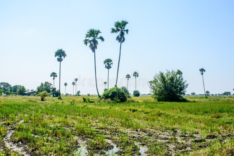 Bello paesaggio con la palma, nella campagna del Myanmar immagini stock libere da diritti