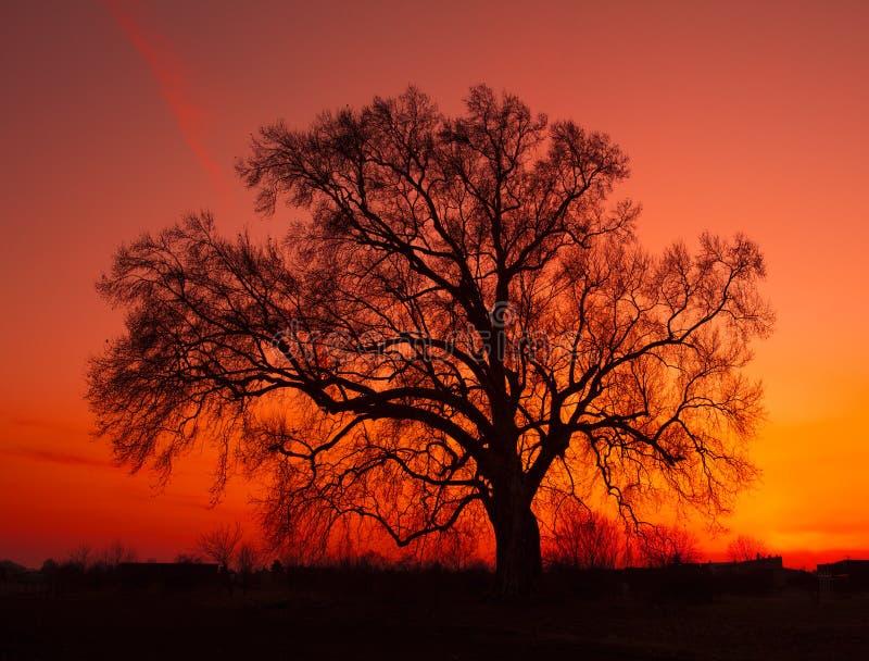 Bello paesaggio con la siluetta degli alberi fotografia stock libera da diritti