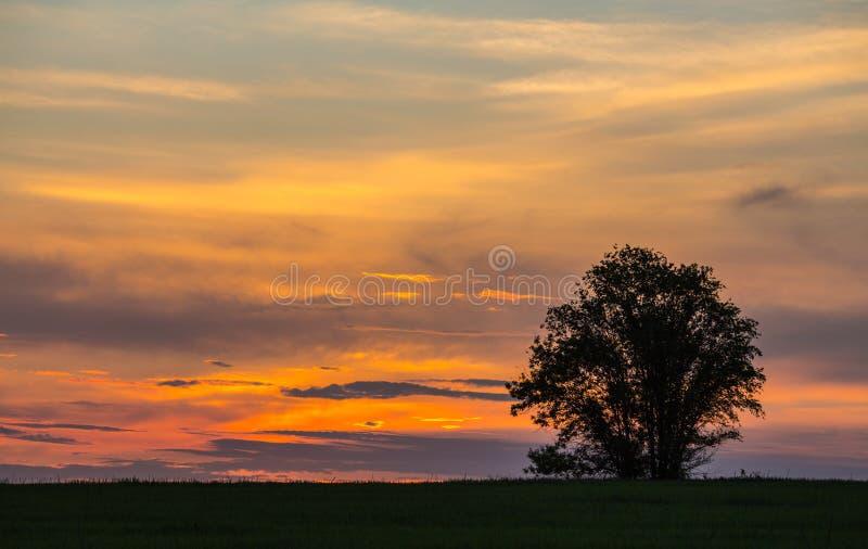 Bello paesaggio con la siluetta degli alberi immagine stock