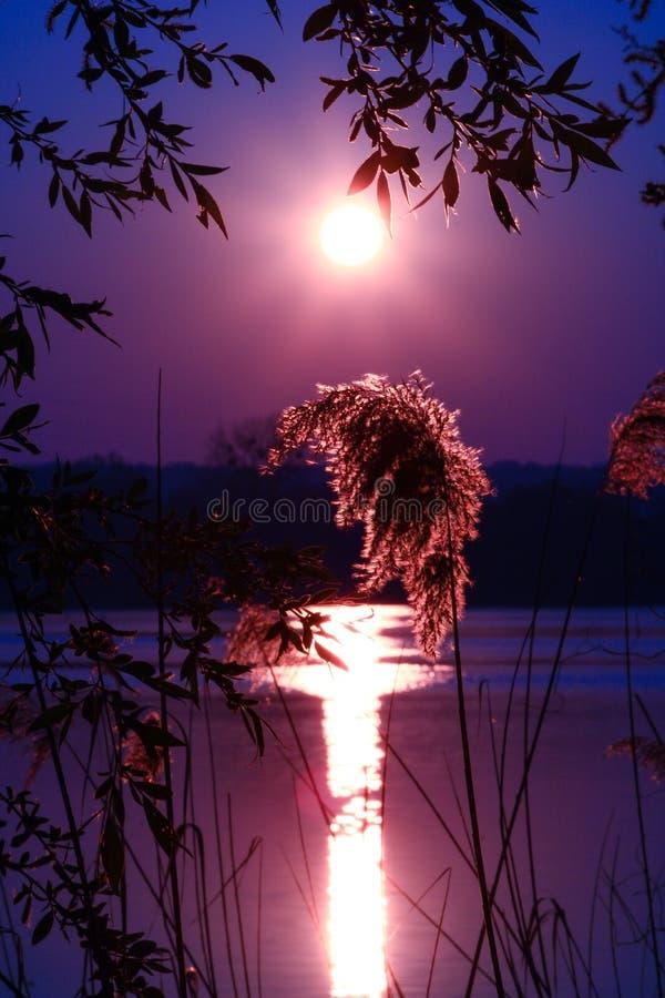 Bello paesaggio con le vegetazioni ed il cielo porpora ad alba fotografie stock libere da diritti