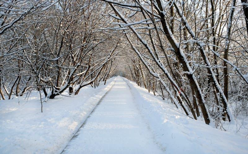 Bello paesaggio con un percorso innevato diritto nel parco fra gli alberi il giorno di inverno soleggiato immagini stock