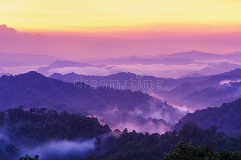 Bello paesaggio crepuscolare in foresta pluviale. immagini stock libere da diritti