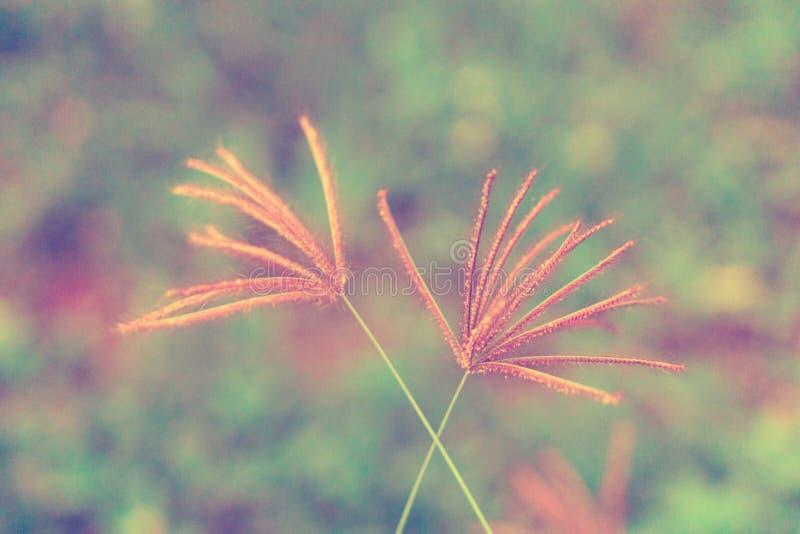 Bello paesaggio del fiore selvaggio della piccola erba rosa, fondo astratto della natura della molla fotografia stock libera da diritti