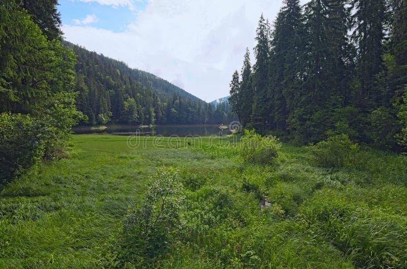 Bello paesaggio del lago Synevyr alla luce di mattina di estate La foresta attillata e le nuvole che riflettono su un'acqua sorgo fotografia stock