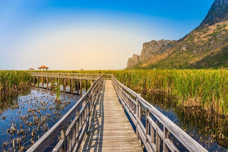 Bello paesaggio del passaggio pedonale del ponte di legno in palude con il campo di erba con il fondo della catena montuosa del c fotografia stock libera da diritti