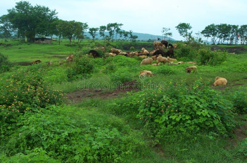 Download Bello Paesaggio Del Terreno Coltivabile In Warje Immagine Stock - Immagine di gruppo, moltitudine: 55365623