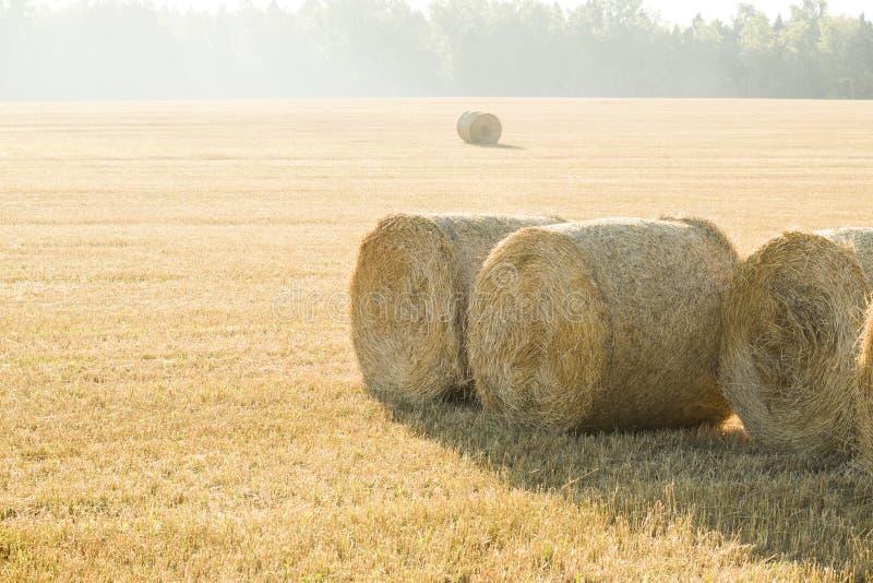 Bello paesaggio dell'azienda agricola di estate con i mucchi di fieno Comcept di agricoltura Foto tonificata con lo spazio della  immagini stock libere da diritti