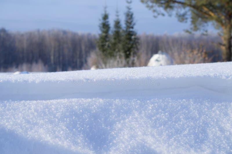 Bello paesaggio dell'inverno in Siberia immagine stock