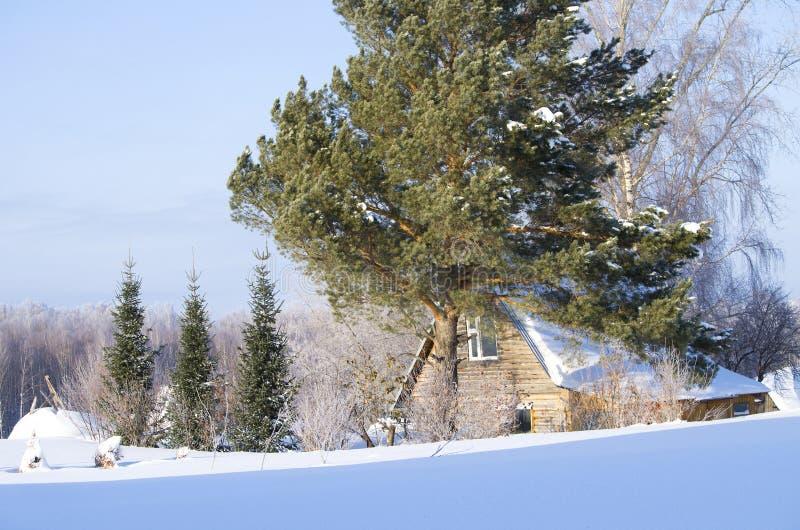 Bello paesaggio dell'inverno in Siberia immagine stock libera da diritti