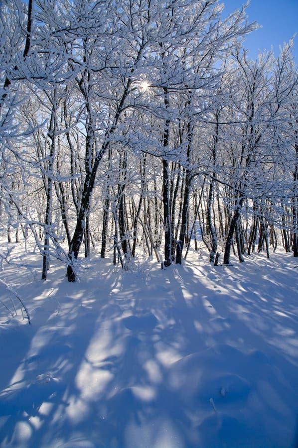 Bello paesaggio della foresta di inverno fotografia stock