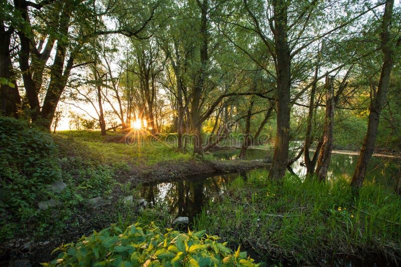 Bello paesaggio della foresta rivierasca immagini stock libere da diritti