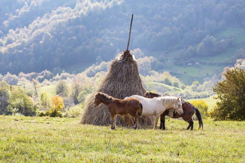 Bello paesaggio della montagna di autunno con tre cavalli immagini stock libere da diritti