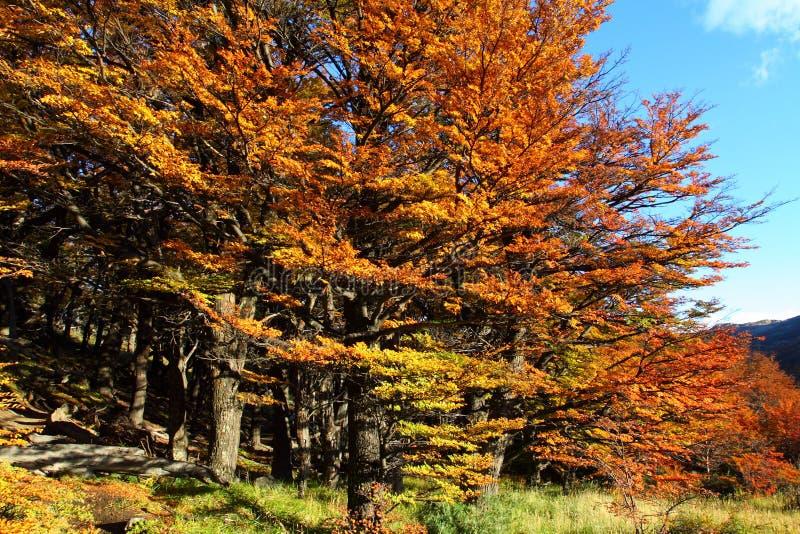 Bello paesaggio della natura con il Mt. Fitz Roy come si vede nel parco nazionale di Los Glaciares, Patagonia, Argentina fotografie stock libere da diritti