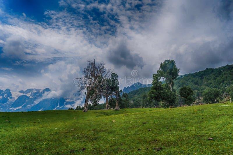 Bello paesaggio della natura con stare albero asciutto immagine stock libera da diritti