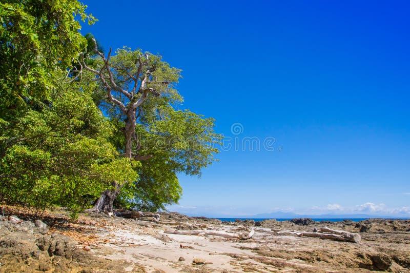 Bello paesaggio della spiaggia rocciosa e degli alberi in Playa Montezuma in cielo blu splendido e nel giorno soleggiato immagini stock libere da diritti