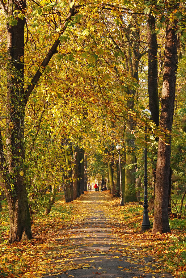 Bello paesaggio di autunno immagini stock libere da diritti