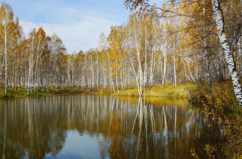 Bello paesaggio di autunno allo stagno fotografia stock