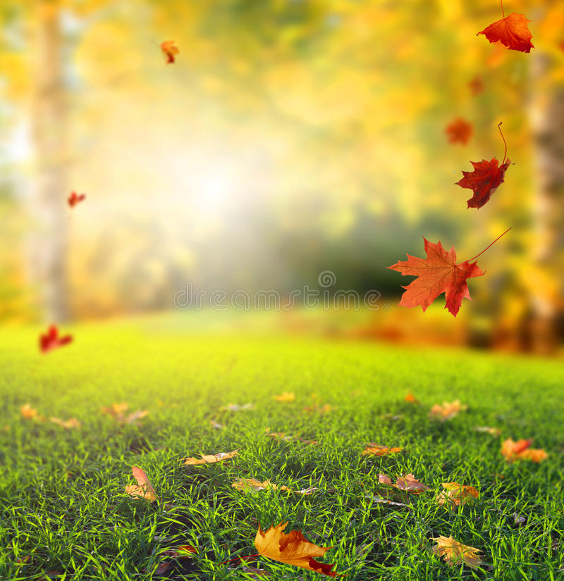 Bello paesaggio di autunno con gli alberi gialli, l'erba verde ed il sole immagine stock libera da diritti