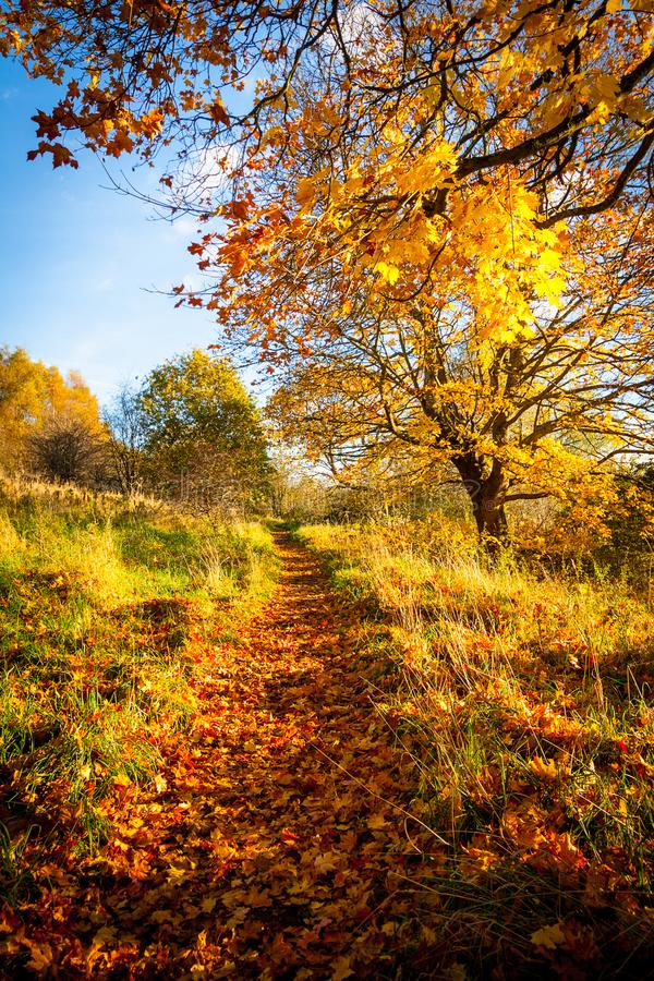 Bello paesaggio di autunno con la linea di alberi ed e una strada nel parco, immagini stock libere da diritti