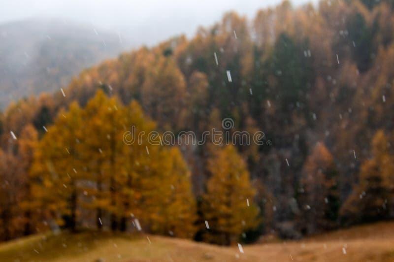 Bello paesaggio di autunno con prima neve che cade su un fondo della foresta immagini stock libere da diritti