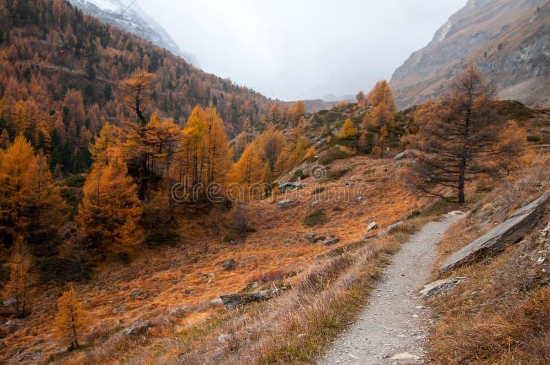 Bello paesaggio di autunno con un percorso lungo il fiume di Zbuttbach nell'area di Zermatt fotografie stock libere da diritti
