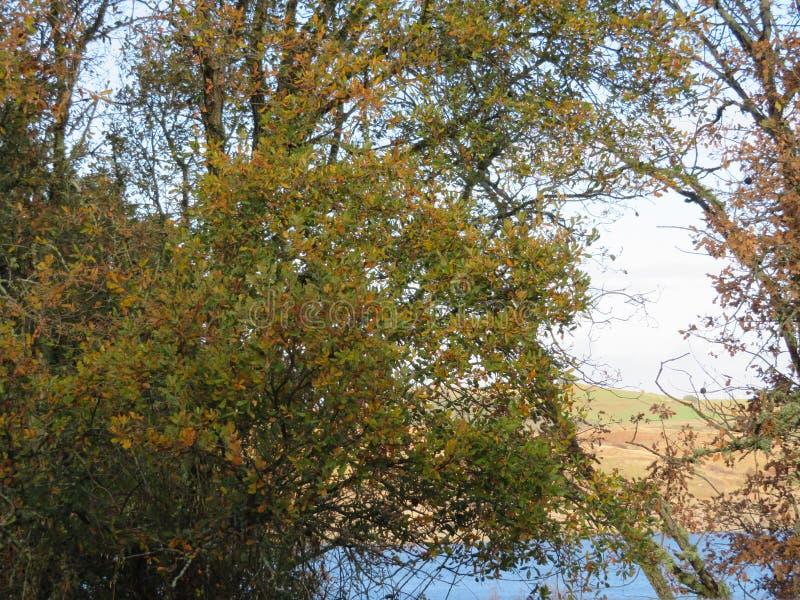 Bello paesaggio di autunno con varietà di colori nella foglia degli alberi immagine stock libera da diritti