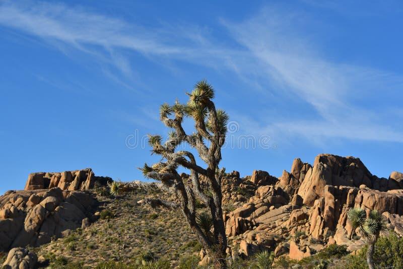 Bello paesaggio di California di Joshua Tree National Park immagini stock
